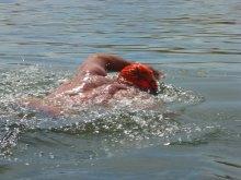 035-swimsnake-1230976