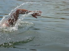 036-swimsnake-1230979