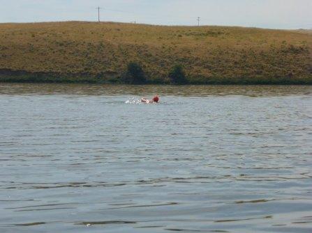 058-swimsnake-1240077