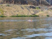 068-swimsnake-1240117